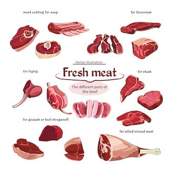 Colección de piezas de carne de res de corte de croquis