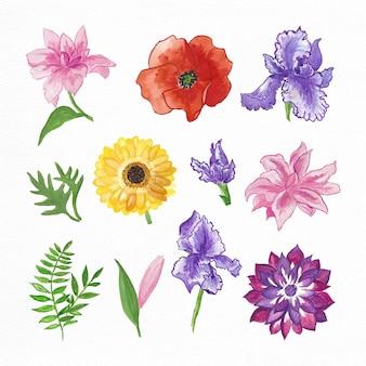 Colección pintada a mano de flores de acuarela