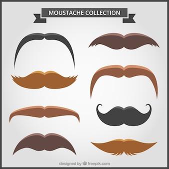 Colección plana de bigotes