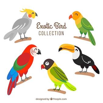Colección plana de pájaros exóticos