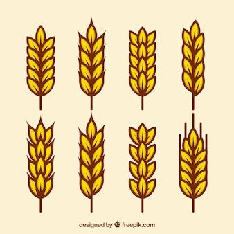 Colección plana de trigo