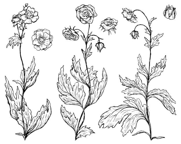 Colección de plantas geum rivale. conjunto de flores silvestres. bocetos de tinta botánica aislados en blanco. ilustración de vector dibujado a mano. clip arts para diseño, decoración.