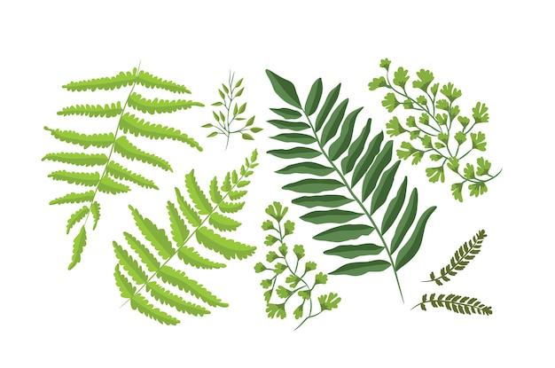 Colección de plantas de helecho