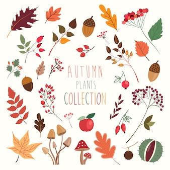 Colección de plantas y hojas decorativas otoñales.