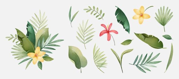 Colección de plantas y hojas tropicales.