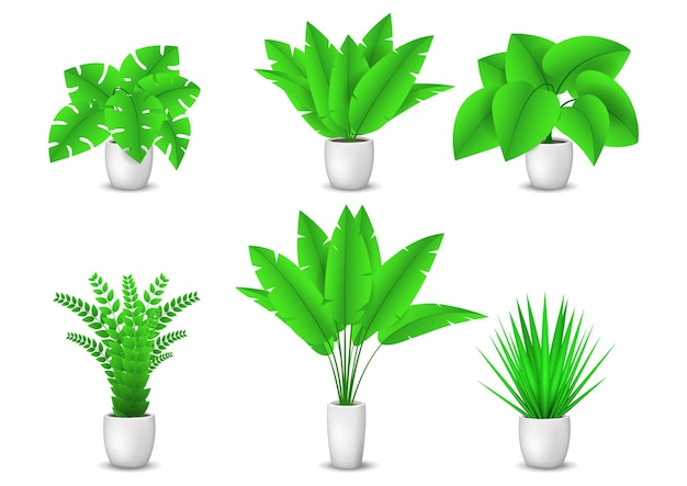 Colección de plantas de interior decorativas aisladas sobre fondo blanco.