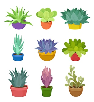 Colección de plantas de interior en macetas de colores.