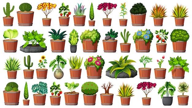 Colección de plantas en maceta en blanco