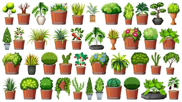 Colección de plantas en macetas en blanco