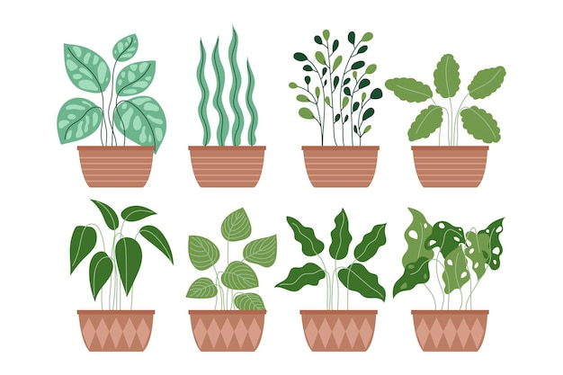 Colección de plantas en macetas de jardín interior de casa de decoración diferente