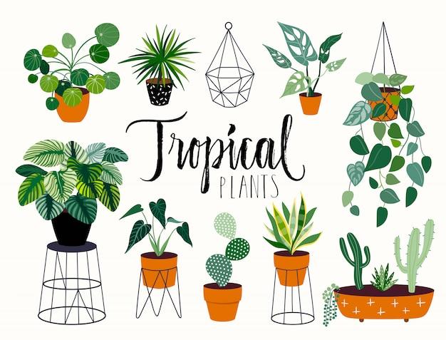 Colección de plantas tropicales con diferentes elementos, letras aisladas y a mano.