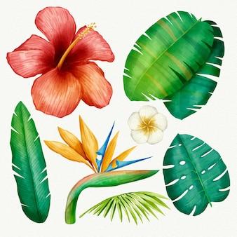 Colección de plantas tropicales ilustrada