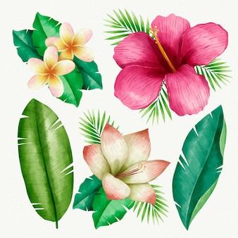 Colección de plantas tropicales ilustrada vector gratuito