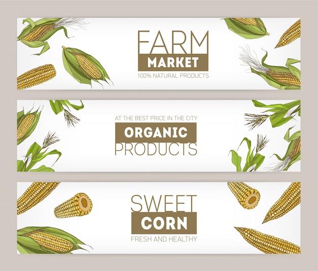 Colección de plantillas de pancartas horizontales con mazorcas de maíz dulce dibujadas a mano realistas