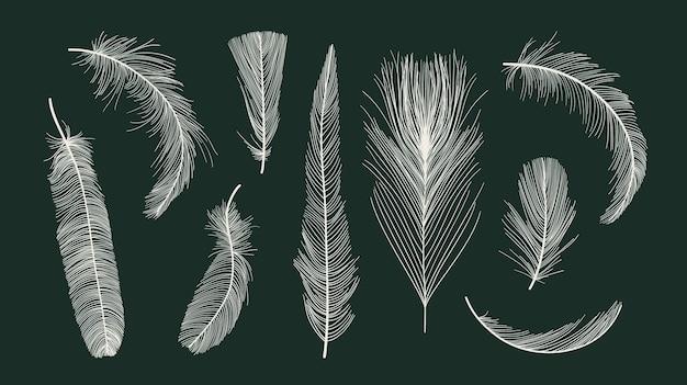 Colección de plumas de aves vectoriales