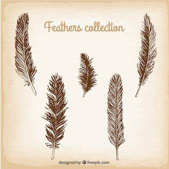 Colección de plumas dibujadas a mano