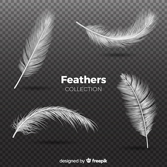 Colección de plumas realista