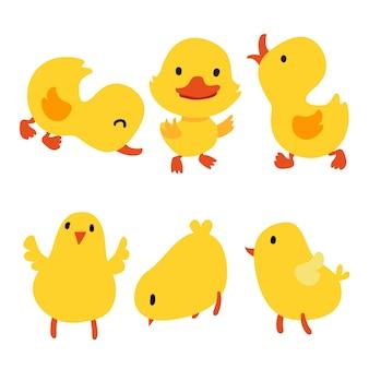 Colección de pollo y pato
