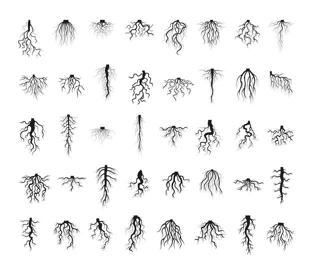 Colección de raíces de plantas