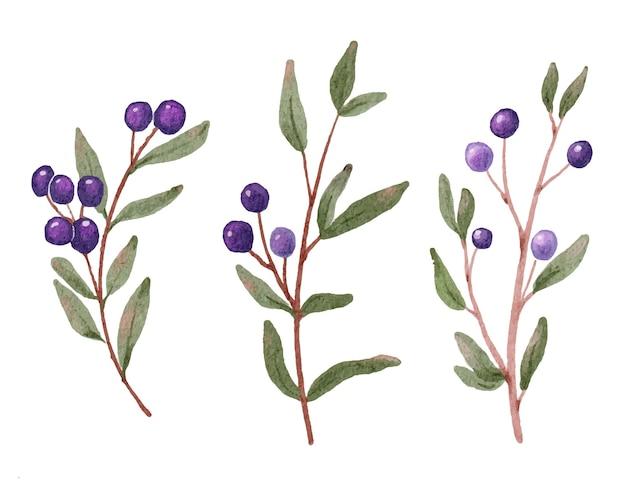 Colección de rama de fruta de baya azul acuarela aislada sobre fondo blanco