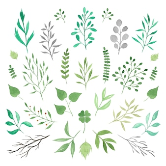 Colección de ramas de acuarela verde