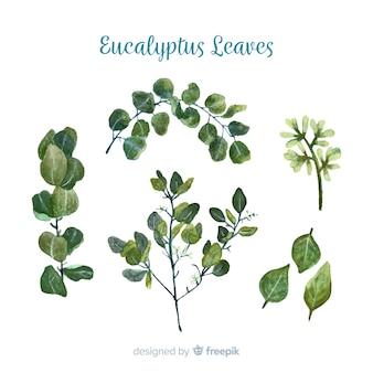 Colección ramas de eucalipto dibujadas a mano