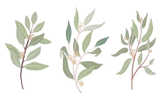 Colección de ramas de hojas de eucalipto sembrado estilo dibujado a mano.
