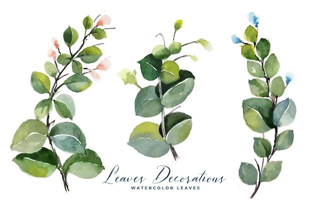 Colección de ramos de hojas verdes en acuarela