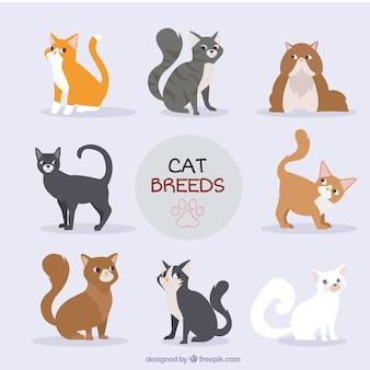 Colección de razas de gatos dibujados a mano