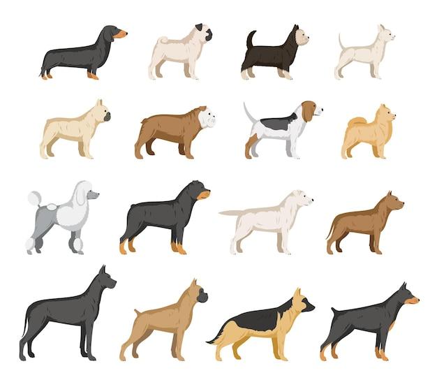 Colección de razas de perros aislado en blanco. colección de iconos de perros