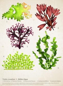 Colección realista de algas marinas