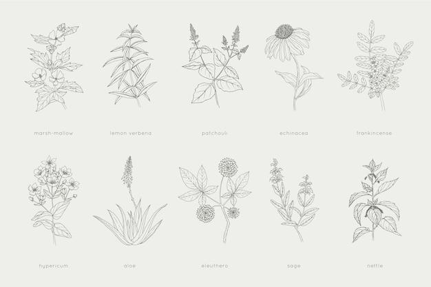 Colección de remedios herbales dibujados a mano.