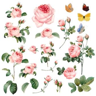 Colección de rosas rosadas dibujadas a mano.