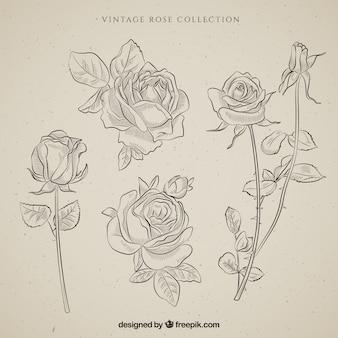 Colección de rosas vintage dibujadas a mano