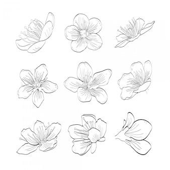 Colección sakura dibujada a mano