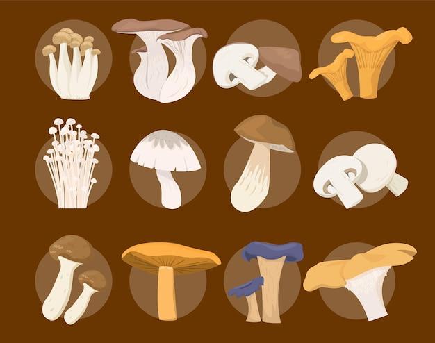 Colección de setas. conjunto de hongos comestibles.