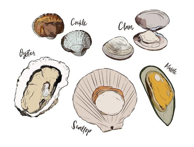 Colección de shell, vector del bosquejo del drenaje de la mano. conjunto de mariscos.