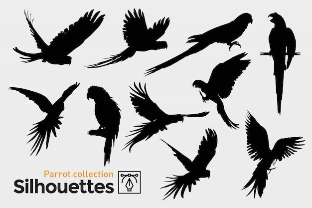 Colección de siluetas de loros. aves exóticas.