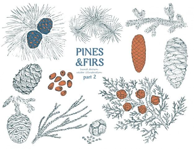 Colección sketch firs elements