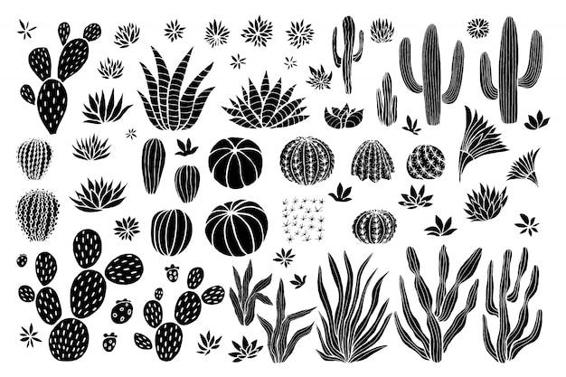 Colección suculenta de cactus.