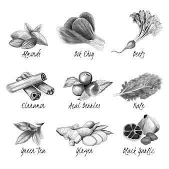 Colección de súper alimentos en blanco y negro dibujado a mano