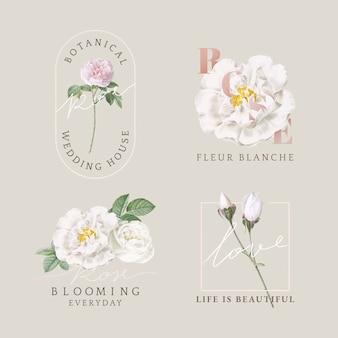 Colección de tarjetas de diseño floral.