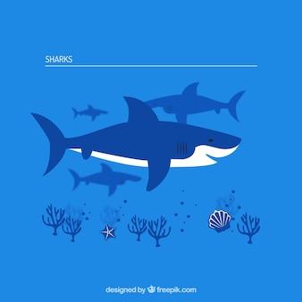 Colección tiburones