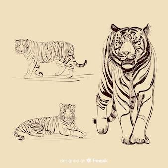 Colección tigres sin color dibujados a mano