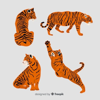 Colección de tigres estilo dibujo a mano