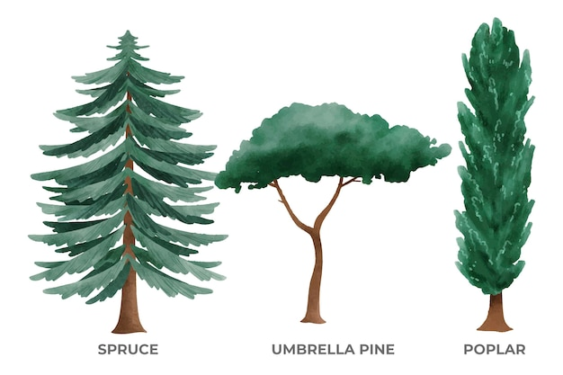 Colección tipo de árboles pintados a mano.
