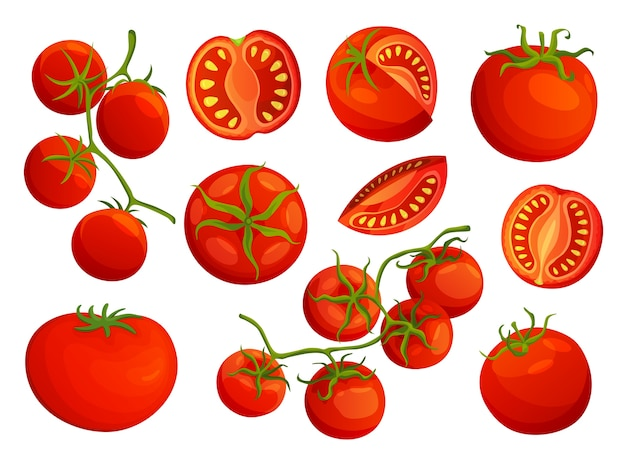 Colección de tomates picados aislado sobre fondo blanco.