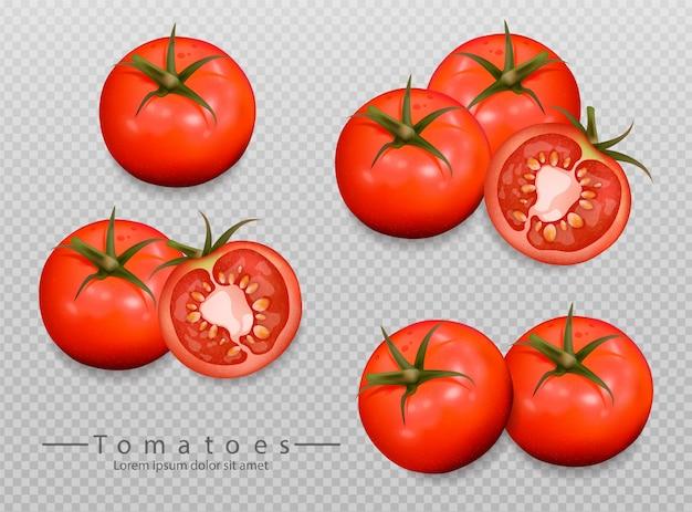 Colección de tomates realistas.