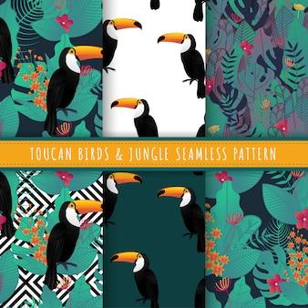 Colección transparente de aves de tucán y patrón de hoja tropical.