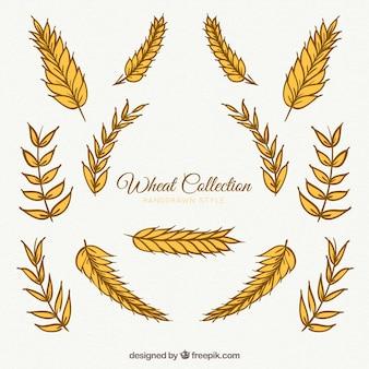 Colección de trigo en estilo hecho a mano